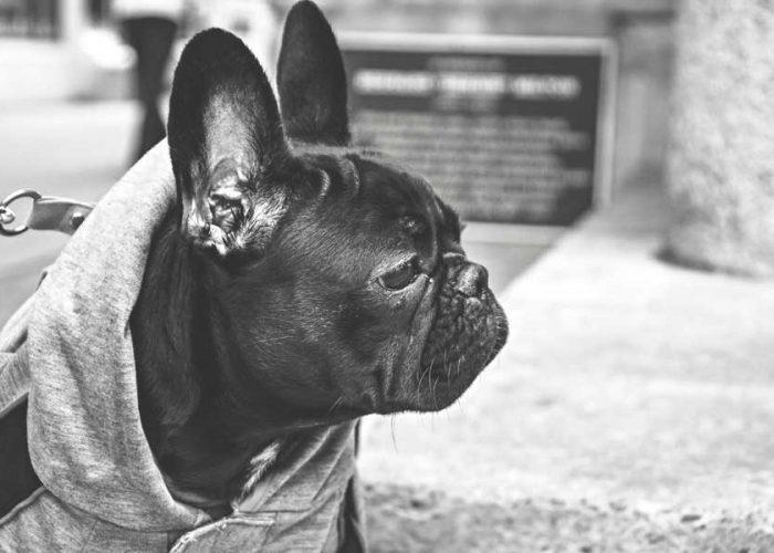 SYDNEY'S BEST DOG-FRIENDLY PARKS TO BREAK A SWEAT IN