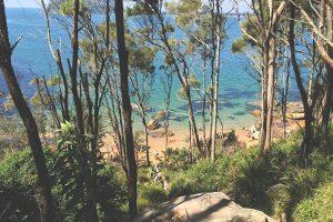 Best walks in the Northern Beaches