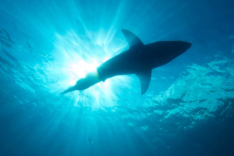 WHAT IT'S LIKE TO GO SHARK CAGE DIVING IN SOUTH AFRICA